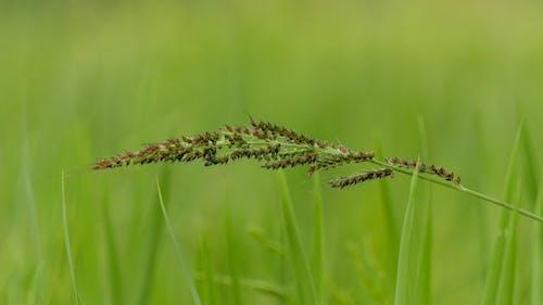 Fotobanka sbezplatnými fotkami na tému hracie pole, kvet, list, makro