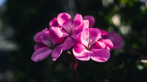 Darmowe zdjęcie z galerii z dzień, kwiat, kwiatowy, kwitnąć