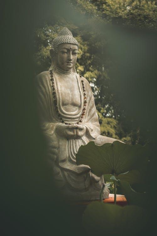 Immagine gratuita di asia, bellezza nella natura, calma, fiore di loto