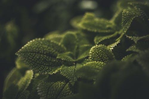 Immagine gratuita di bellezza nella natura, foglie, impianto, sfondo della natura