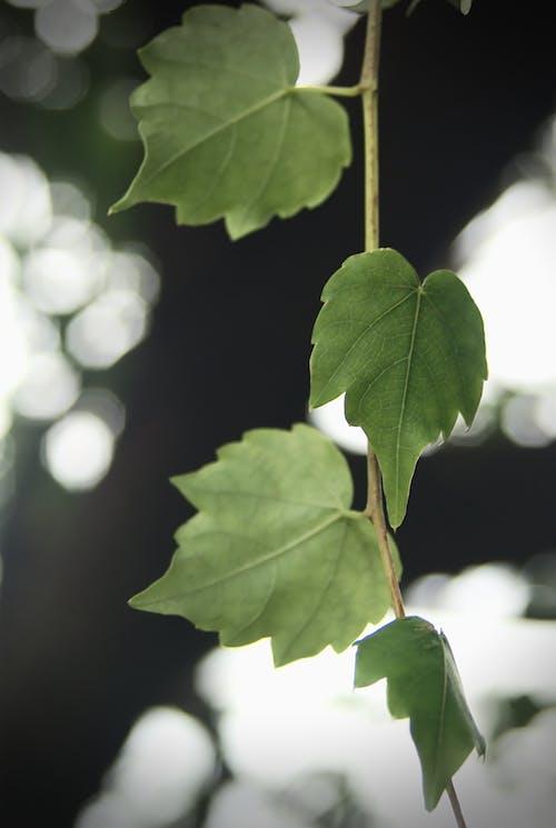 Бесплатное стоковое фото с листья