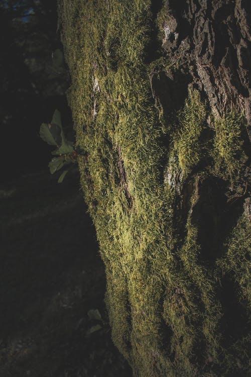 Immagine gratuita di bellezza nella natura, madre natura, muschio, muschio verde