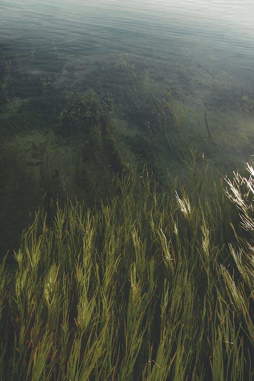 Immagine gratuita di bellezza nella natura, fiume, natura, pianta del lago