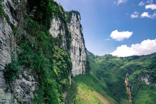丘陵, 叢林, 增長, 天性 的 免费素材照片