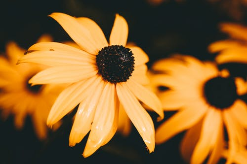 Foto profissional grátis de alegre, amarelo, ao ar livre, atraente