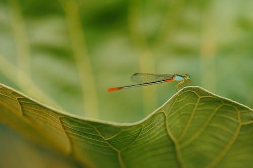 Fotobanka sbezplatnými fotkami na tému drak lietať, hmyz, jasný, pestrofarebný