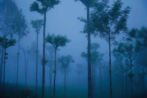Fotobanka sbezplatnými fotkami na tému hmla, modrá, náladový, nilgiri