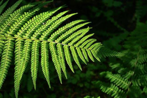 Gratis stockfoto met blad, groen blad, kleur, palmblad