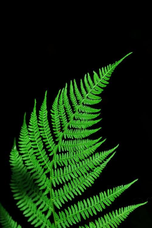 Photos gratuites de arrière-plan noir, botanique, brillant, couleur