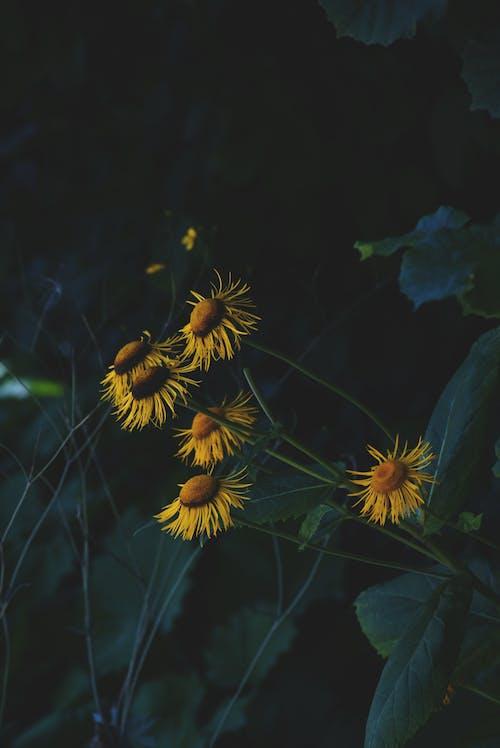 Бесплатное стоковое фото с завод, лепестки, флора, цвести