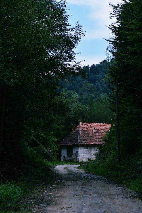 Бесплатное стоковое фото с деревья, дом, дорога, дорожка