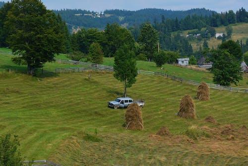 Foto profissional grátis de agricultura, área, campina, chácara