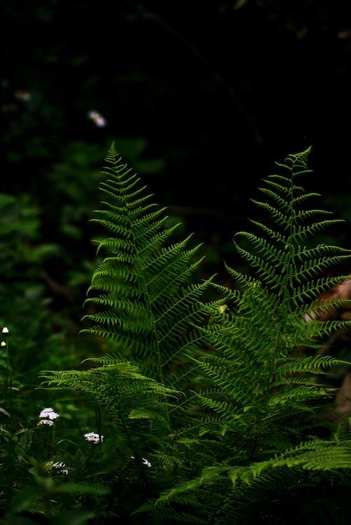 Darmowe zdjęcie z galerii z liść palmy, liście, paproć, roślina