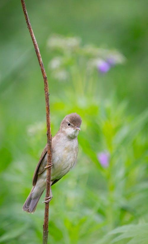 Immagine gratuita di estate, natura, uccello
