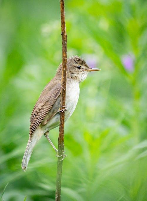 Immagine gratuita di estate, natura, uccelli