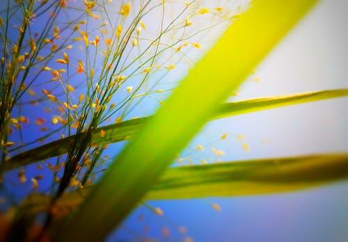 4k 바탕화면, HD 바탕화면, 꽃 바탕화면, 데스크톱 바탕화면의 무료 스톡 사진