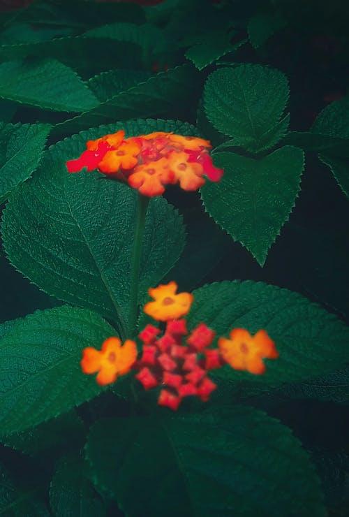 4k 바탕화면, 꽃, 꽃 바탕화면, 꽃다발의 무료 스톡 사진