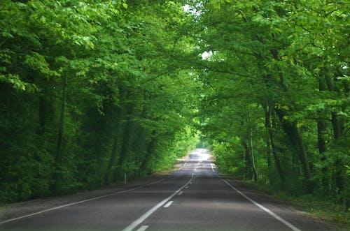 Imagine de stoc gratuită din arbore, arc, asfalt, cale