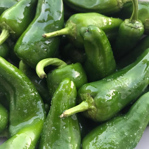 Free stock photo of green bell pepper