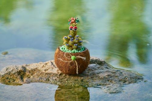 Ilmainen kuvapankkikuva tunnisteilla h2o, kaktus, kallio, kasvi