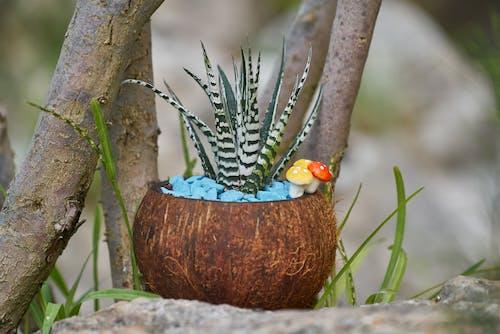 Foto d'estoc gratuïta de decoració, planta, planta en un test
