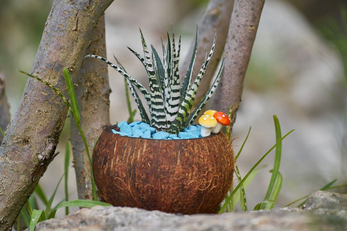 dekor, rastlina, rastlina vkvetináči