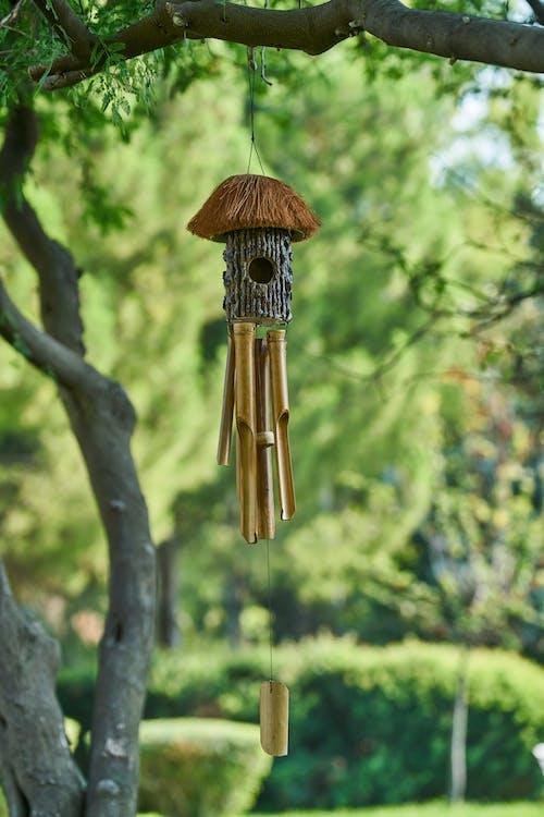 Безкоштовне стокове фото на тему «висіння, декор, дерево, передзвін вітру»