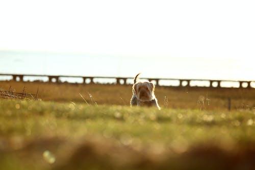 Foto profissional grátis de animal, animal de estimação, animal doméstico, ao ar livre