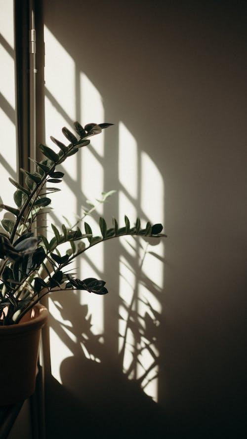 Fotos de stock gratuitas de cacerola, hojas verdes, naturaleza muerta, planta de interior