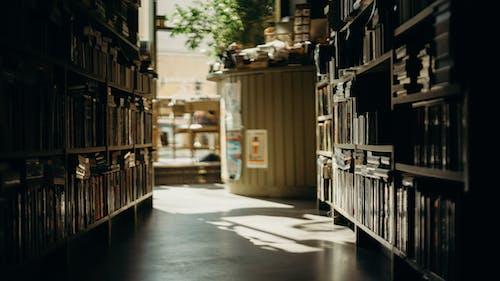Immagine gratuita di azione, biblioteca, libreria, libri