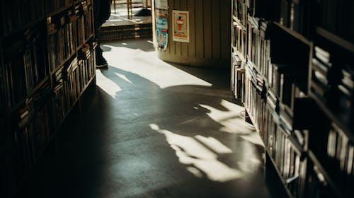 Books organized on shelves