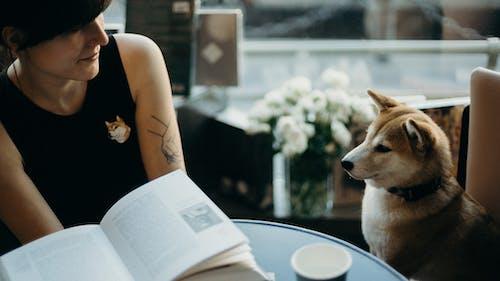 Základová fotografie zdarma na téma čistokrevný, dáma, denní, domácí mazlíček