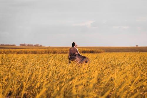 Kostnadsfri bild av åkermark, blåsigt, bris, fält