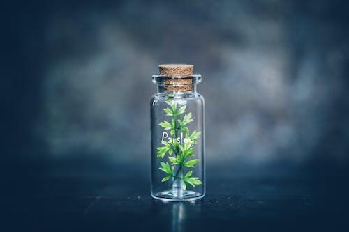 Fotos de stock gratuitas de botella, contenedor, envase, hierba