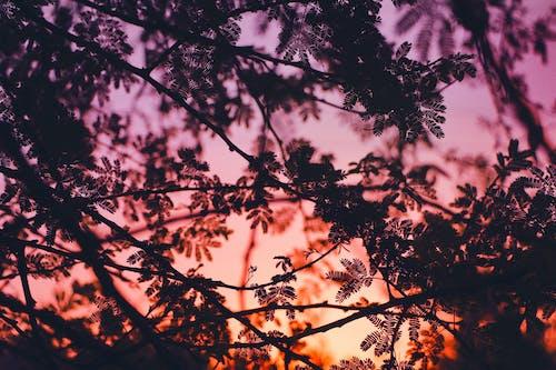 ağaçlar, alaca karanlık, bokeh, doğa arka plan içeren Ücretsiz stok fotoğraf