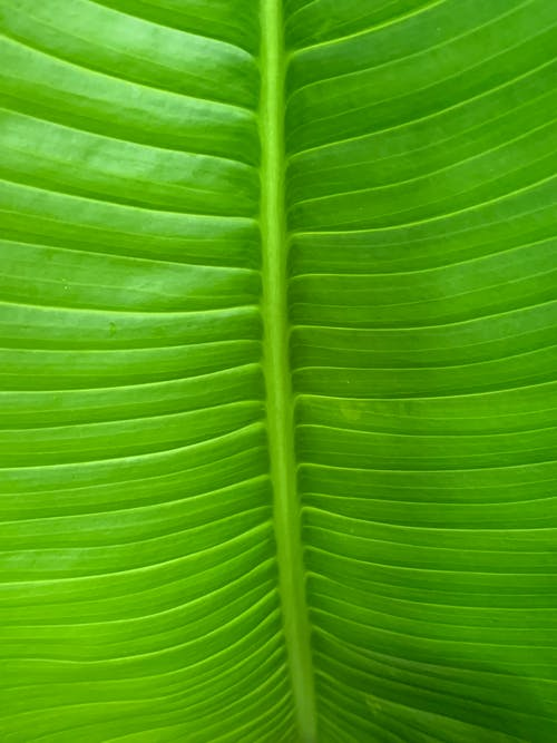 Free stock photo of green, palm, plants, Tropical plants