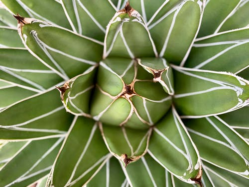 Photos gratuites de acéré, agave, aloe, botanique