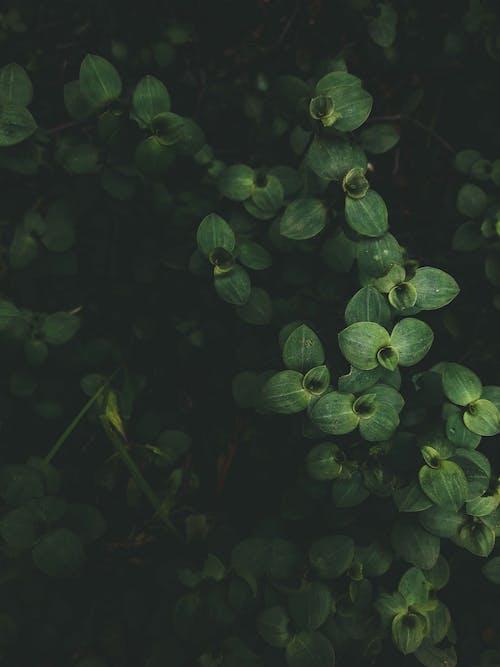 Бесплатное стоковое фото с зеленые листья, листва, листья, сад