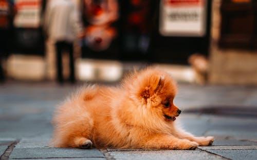 Immagine gratuita di animale carino, cagnolino, cane, cane carino