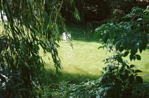 Бесплатное стоковое фото с вид, вода, выращивание, выращивать