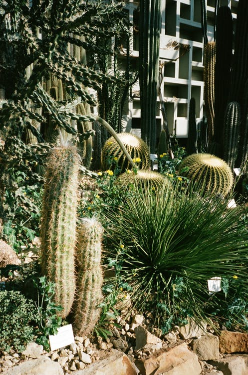 architettura, cactus, colori