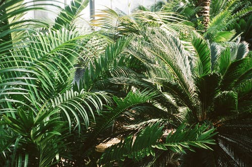 Photo of Palm Plants