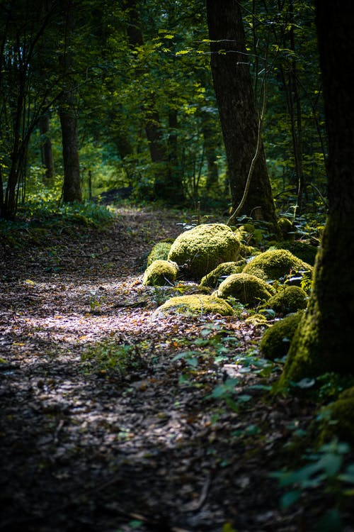 Imagine de stoc gratuită din acoperit de mușchi, arbori, cale, cărare
