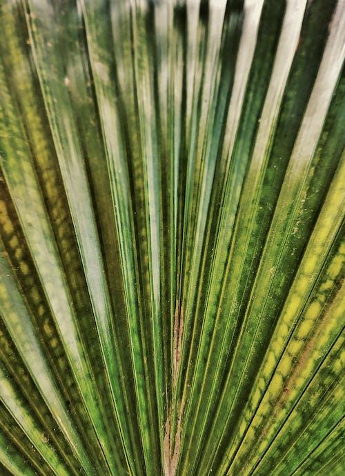 Gratis arkivbilde med blad, farger, fokus, frisk
