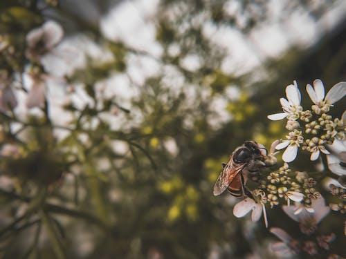 Foto profissional grátis de animal, fotografia de insetos, fotografia de pequenos seres