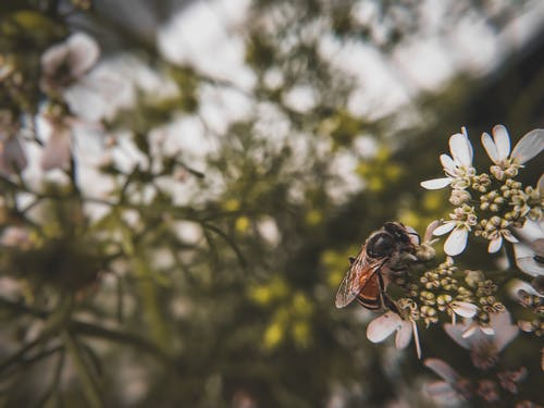 Gratis arkivbilde med dyr, insektfotografering, makrofotografering