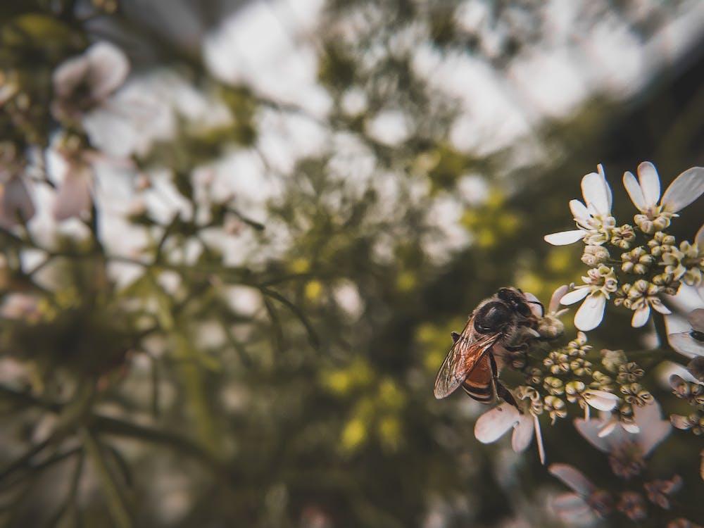 animal, bicho, fotografia de insetos