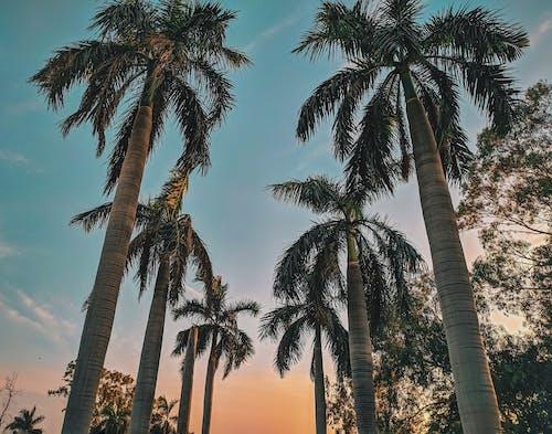 Безкоштовне стокове фото на тему «вечір, дерева, Захід сонця, золота година»