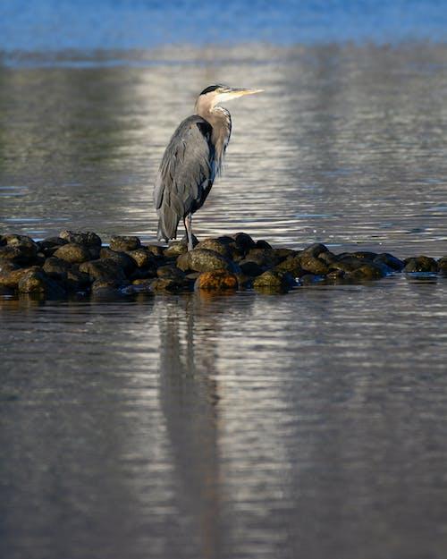 balıkçıl, kuş içeren Ücretsiz stok fotoğraf