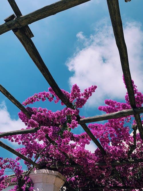 Pink-petaled Flowering Plant